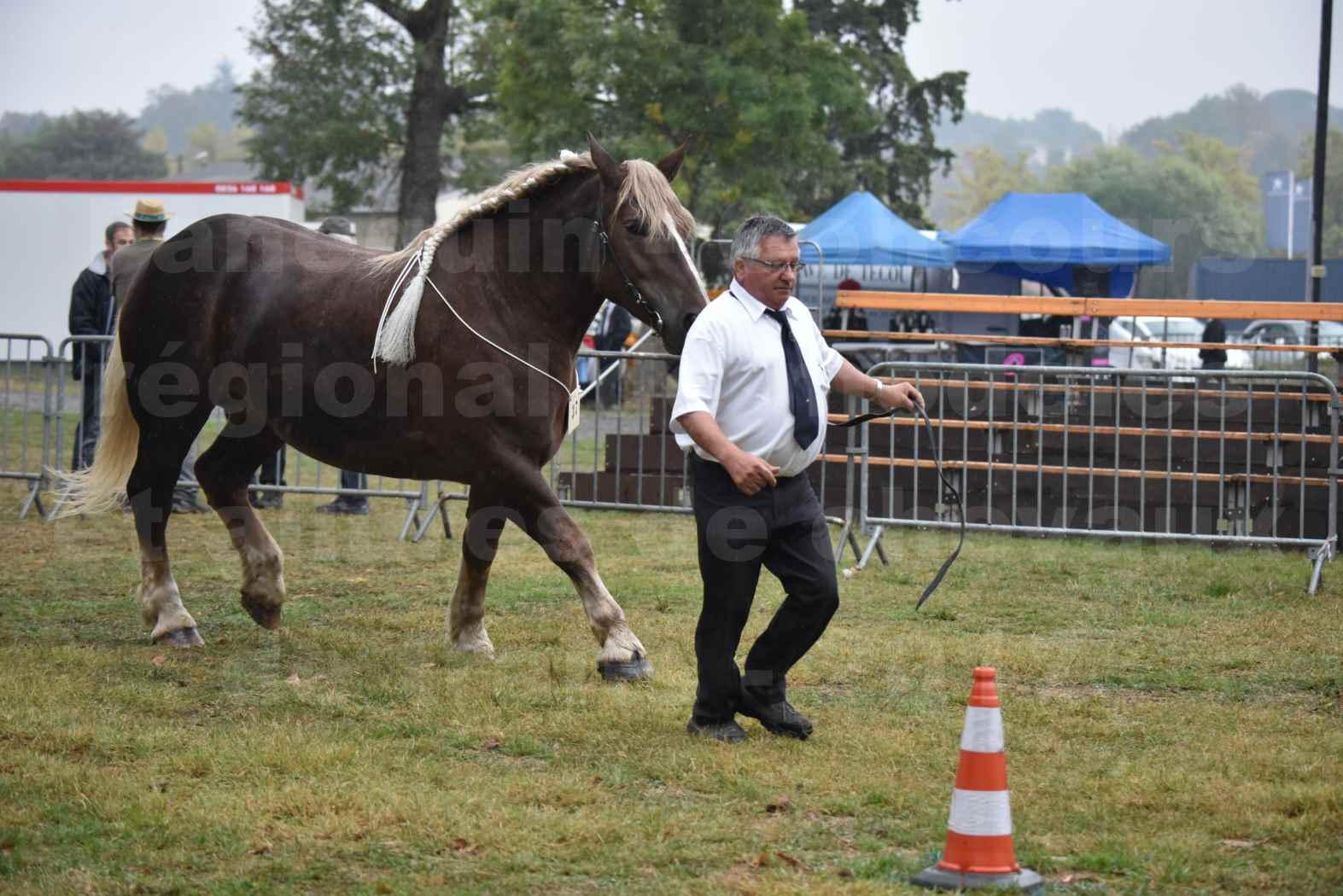 Concours Régional de chevaux de traits en 2017 - Trait BRETON - ELENNE DE TOU FOLL - 23
