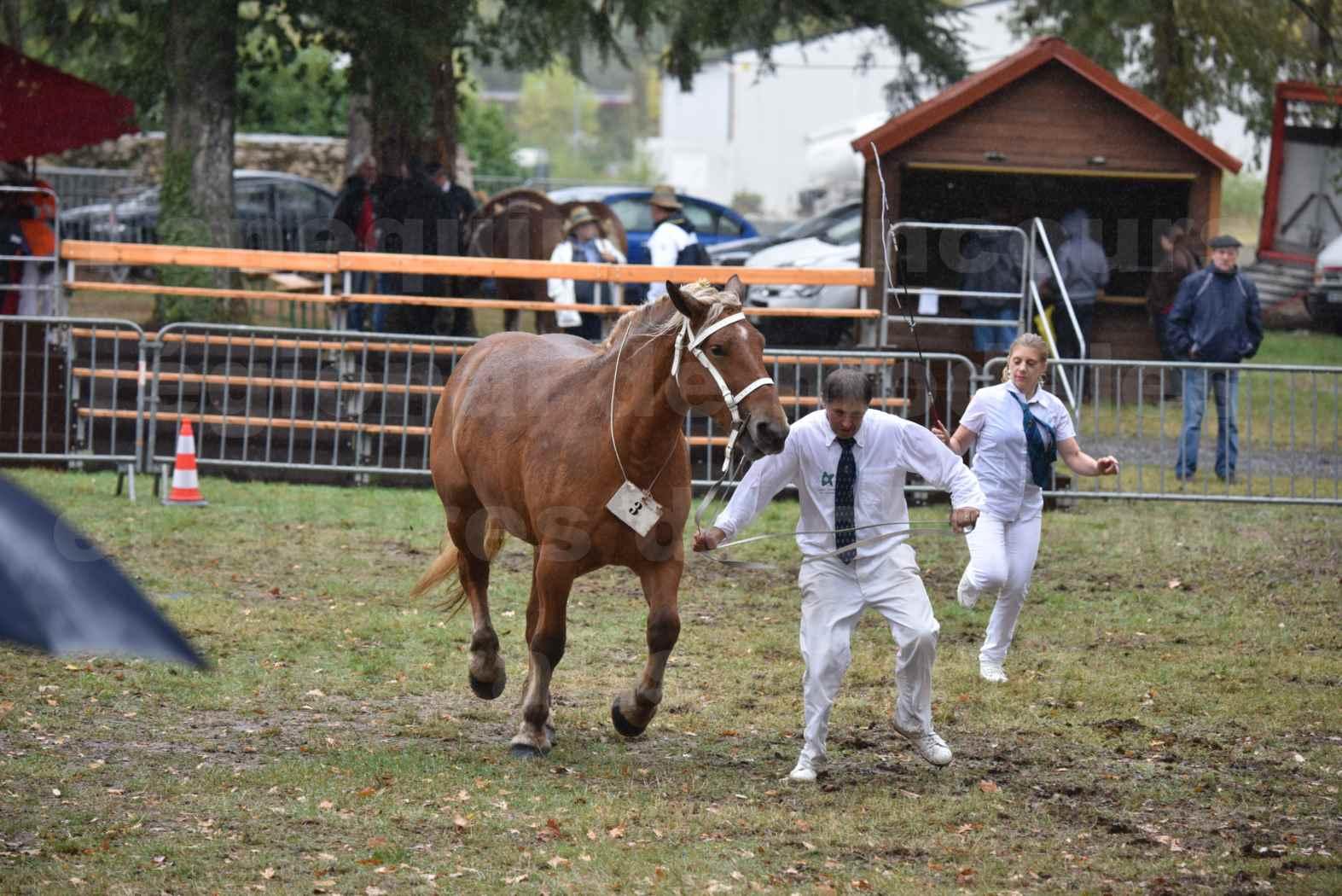 Concours Régional de chevaux de traits en 2017 - Trait COMTOIS - FIDJY DE GRILLOLES - 06