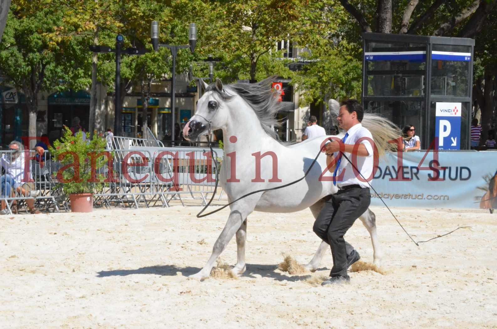 Concours National de Nîmes de chevaux ARABES 2014 - Sélection - SHAOLIN DE NEDJAIA - 29