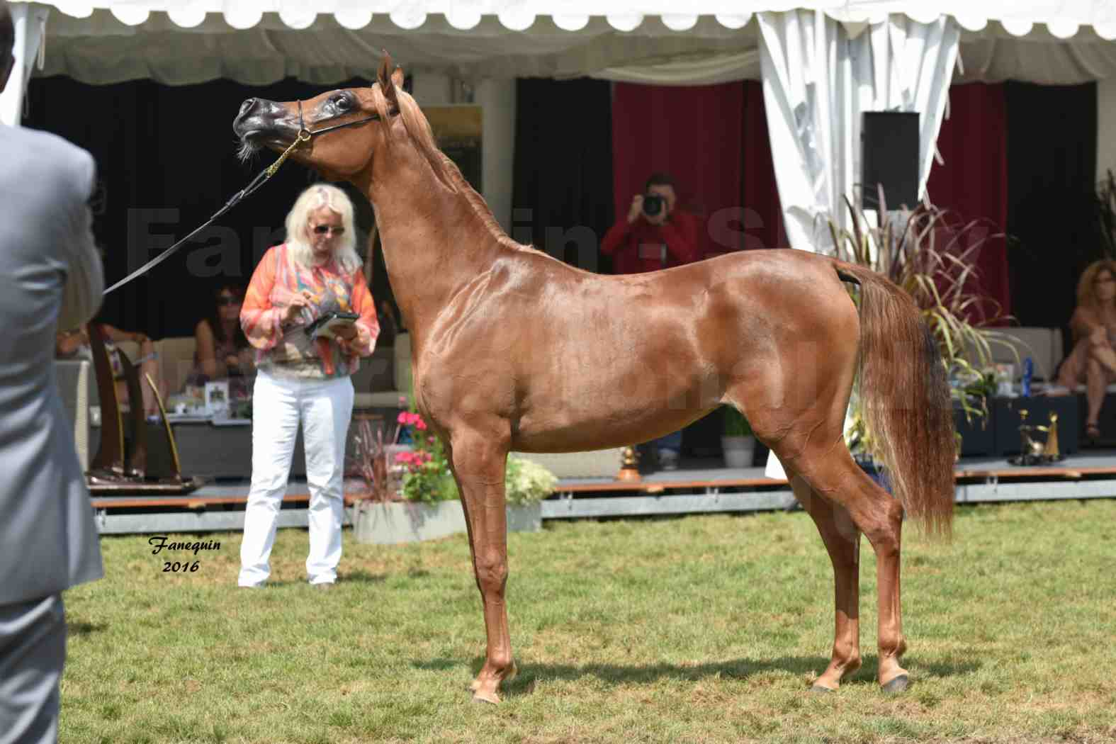 International Arabian Horse Show B de VICHY 2016 - JA FALAENE - Notre Sélection - 09
