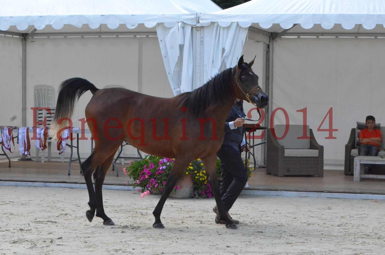Championnat de FRANCE 2014 - Amateurs - KAL'ELLE D'ELHORIA - 29
