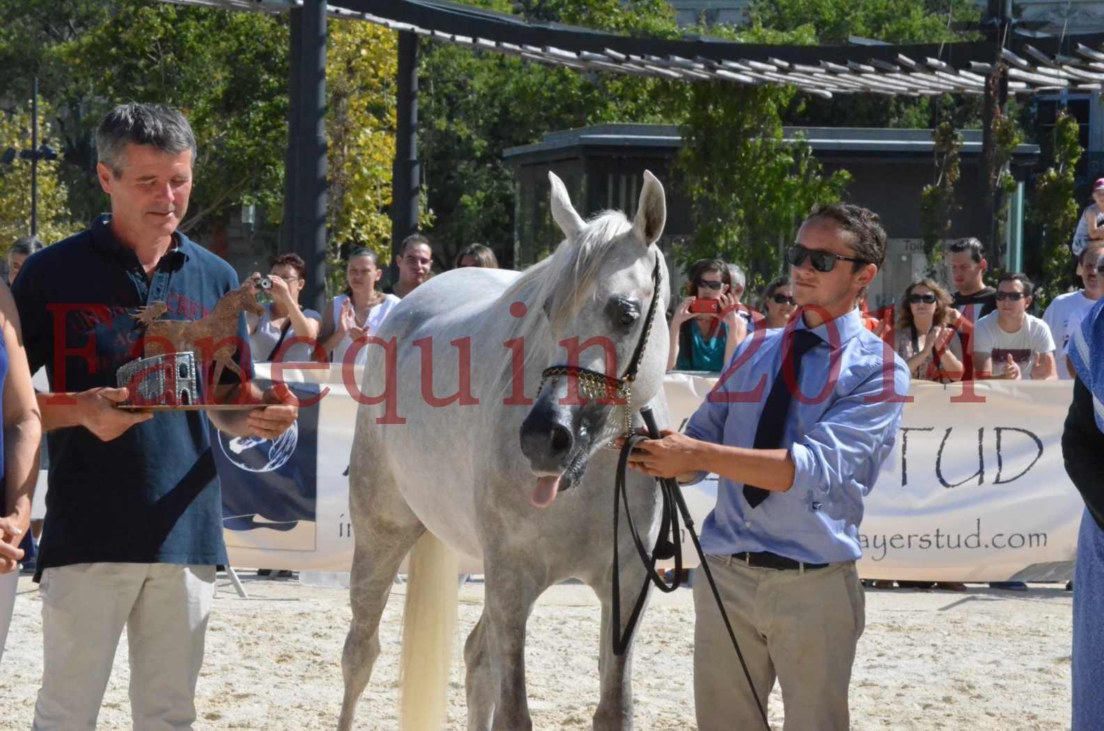 Concours national de Nîmes 2014 - Championnat Femelles Juniors - VOLODIA DE LAFON - 29