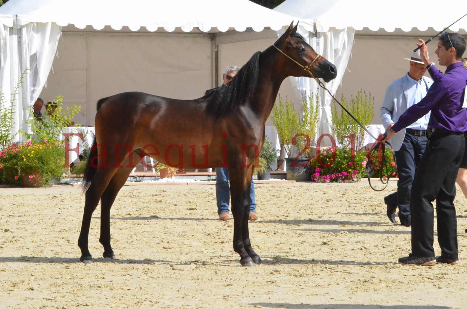 Championnat de FRANCE 2014 - Amateurs - SH FARAJAA - 33