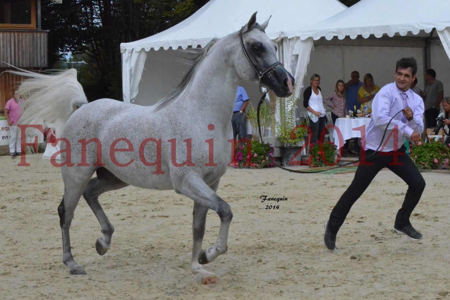 CHAMPIONNAT DE FRANCE  2014 A POMPADOUR - Notre Sélection - SHEYK DE GARGASSAN - 12