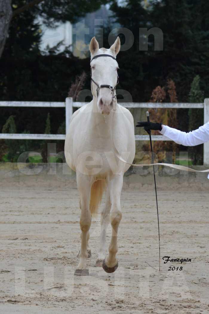 Confirmation de chevaux LUSITANIENS aux Haras d'UZES Novembre 2018 - LOLIBLOU - 01