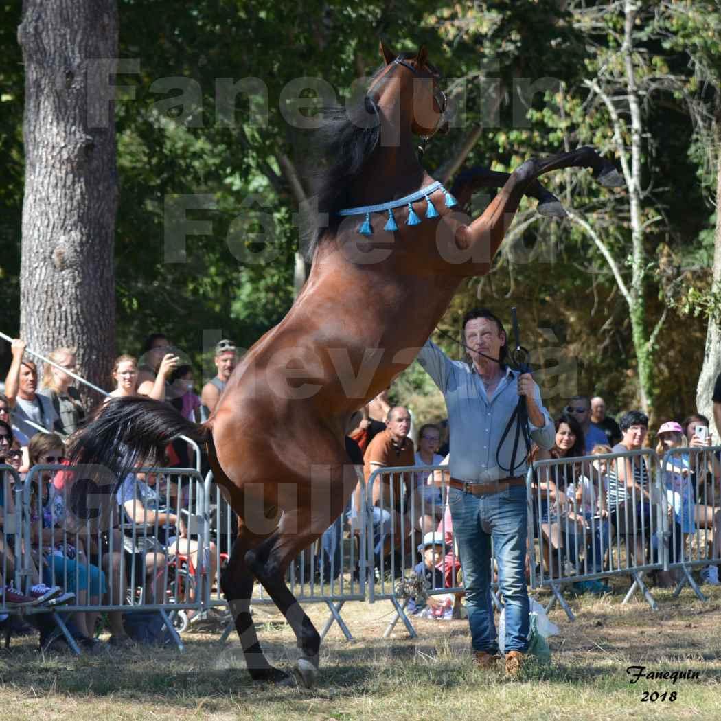Fête du cheval à GRAULHET le 16 septembre 2018 - Présentation de chevaux Arabe Elevage de GACIA - 08