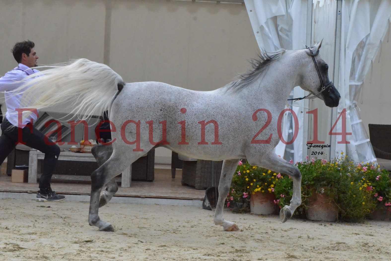 CHAMPIONNAT DE FRANCE  2014 A POMPADOUR - Notre Sélection - SHEYK DE GARGASSAN - 06