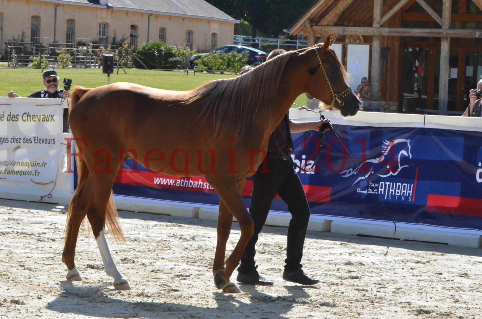 Championnat de FRANCE 2014 - Amateurs - SELECTO IBN SAMAWI - 019