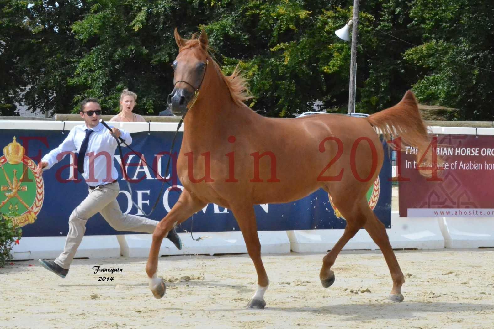 CHAMPIONNAT DE FRANCE 2014 A POMPADOUR - Notre Sélection - LUTFINAH JA - 28