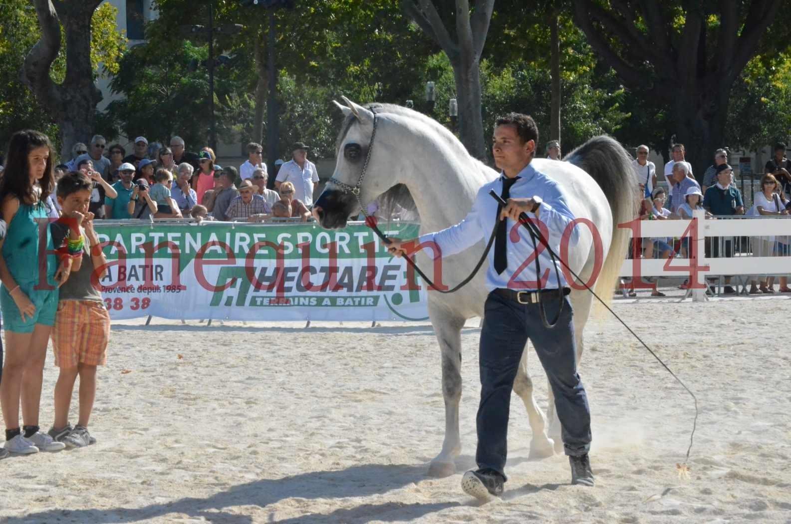 Concours National de Nîmes de chevaux ARABES 2014 - Championnat - SHAOLIN DE NEDJAIA - 46