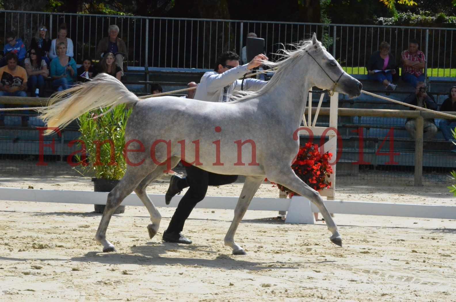 Championnat de FRANCE 2014 - Amateurs - VOLODIA DE LAFON - 025