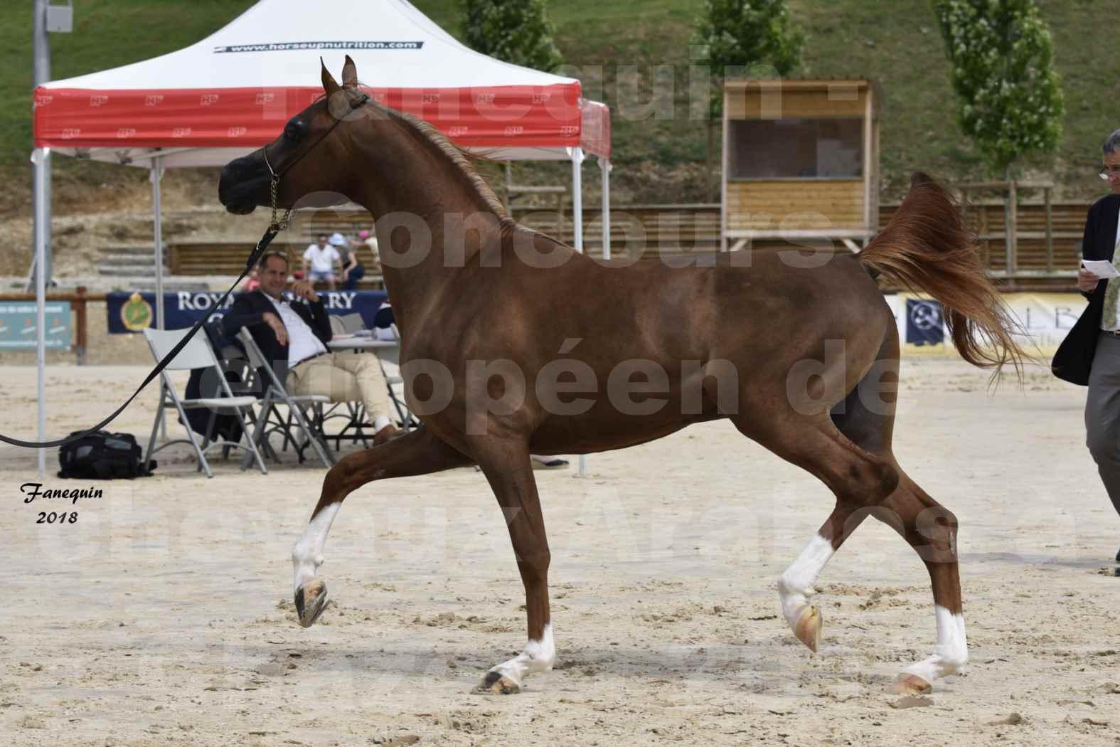 Concours Européen de chevaux Arabes à Chazey sur Ain 2018 - FANTASTIK - Notre Sélection - 6