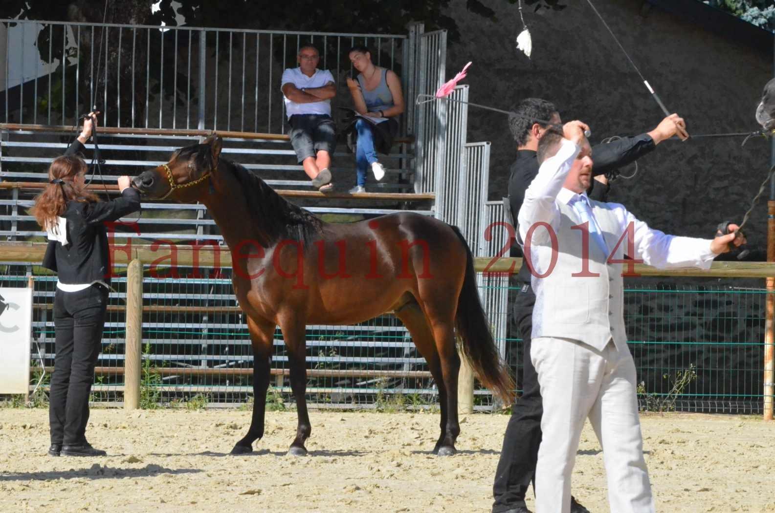 Championnat de FRANCE 2014 - Amateurs - JA KHALEB - 41