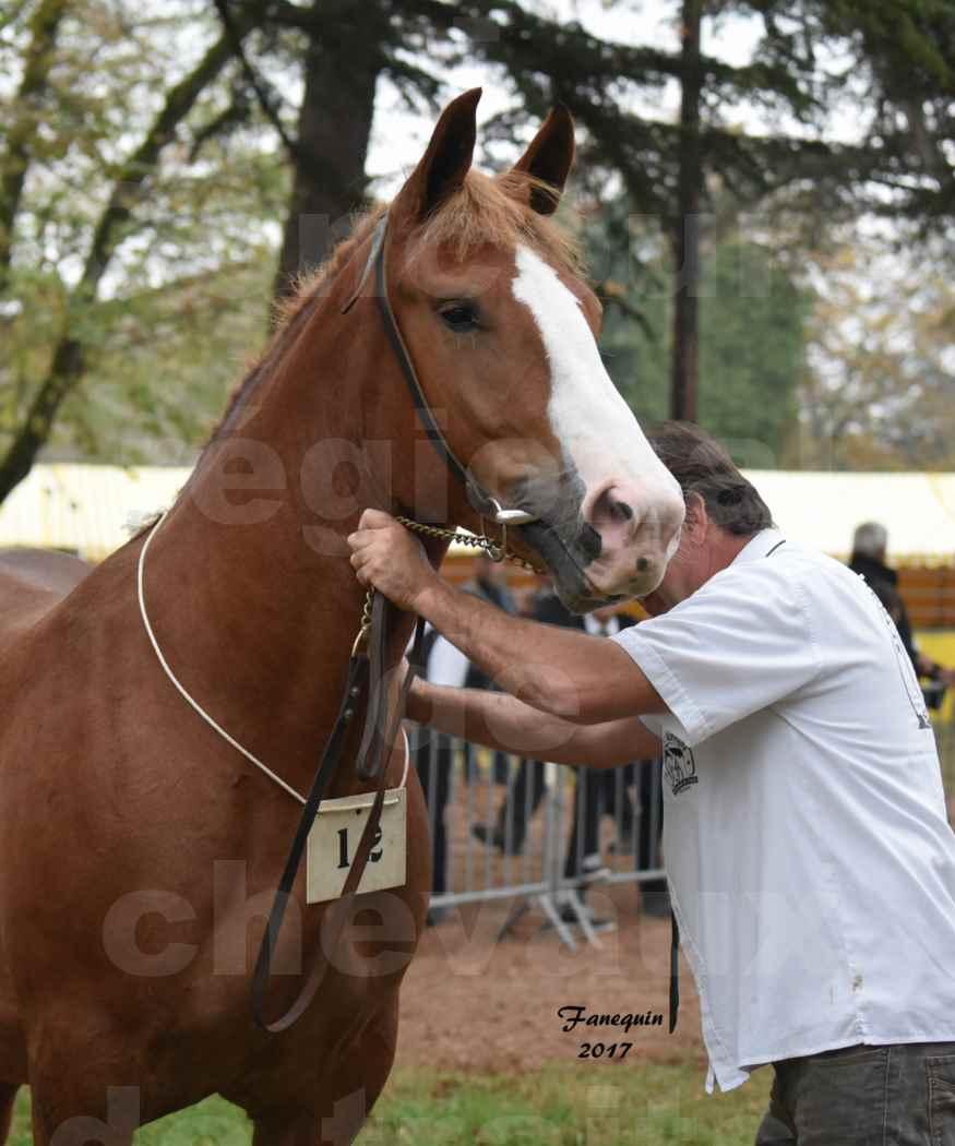 Concours Régional de chevaux de traits en 2017 - Trait BRETON - FLICKA 26