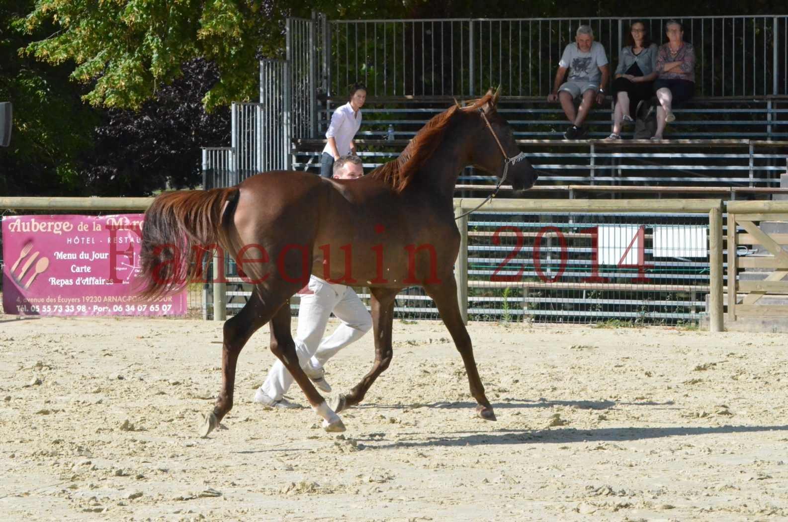 Championnat de FRANCE 2014 - Amateurs - LAMAL - 50