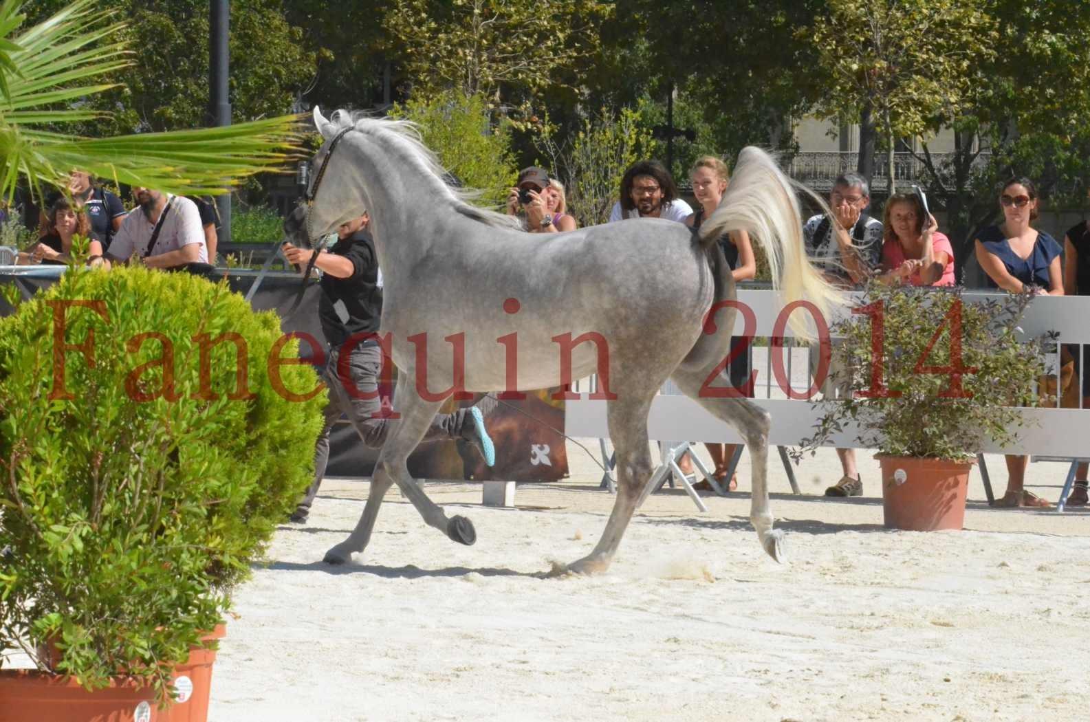 Concours national de Nîmes 2014 - Sélection  - VOLODIA DE LAFON - 17
