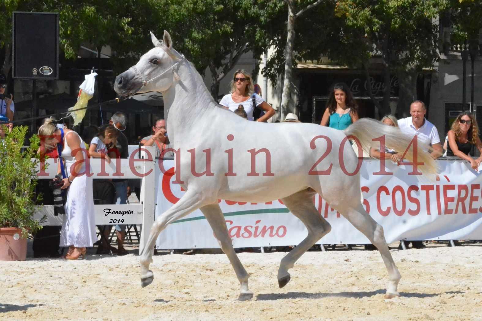 Concours National de Nîmes de chevaux ARABES 2014 - ENVY ETERNITY - 04