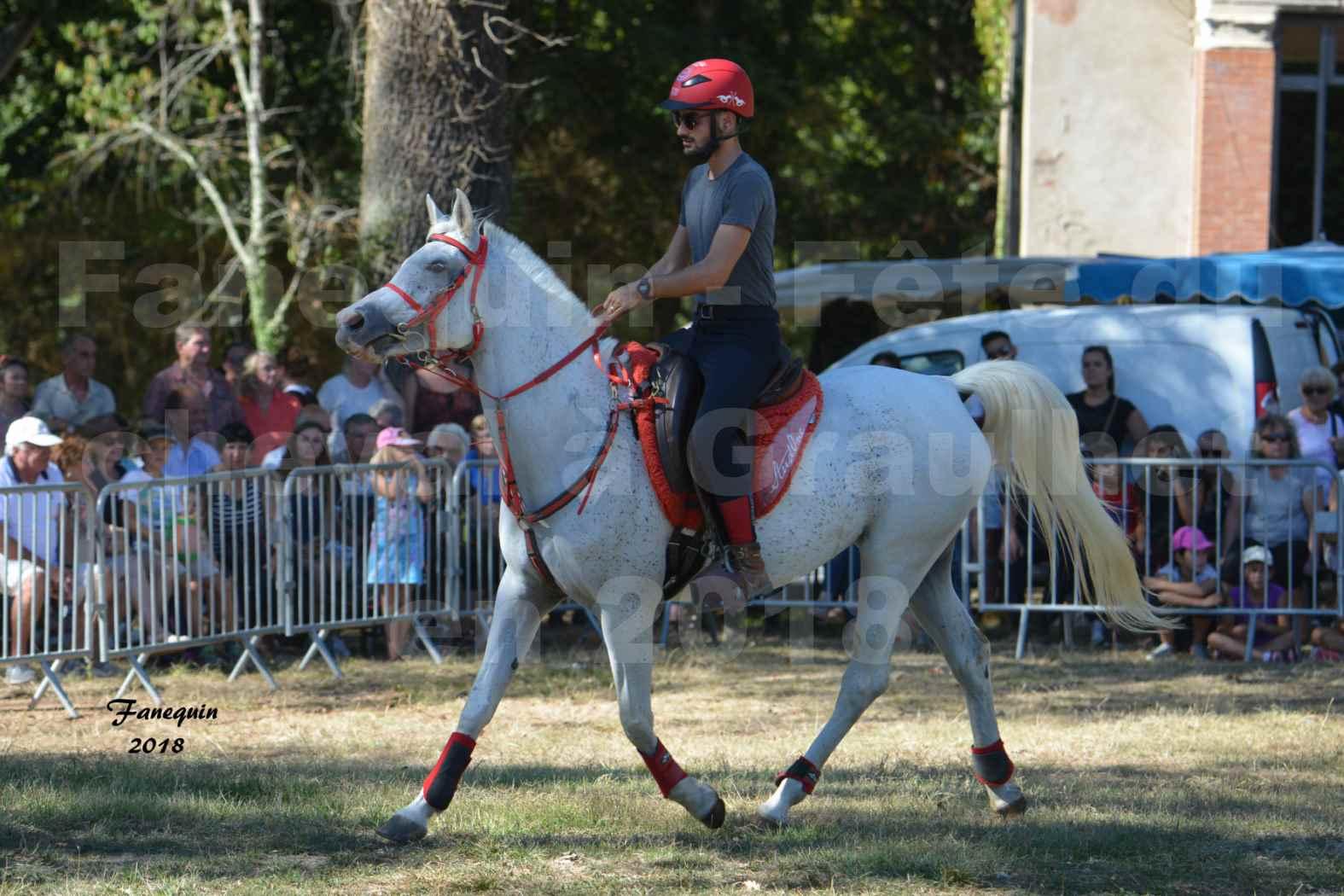 Fête du cheval à GRAULHET le 16 septembre 2018 - Présentation de chevaux Arabe Elevage de GACIA - 05