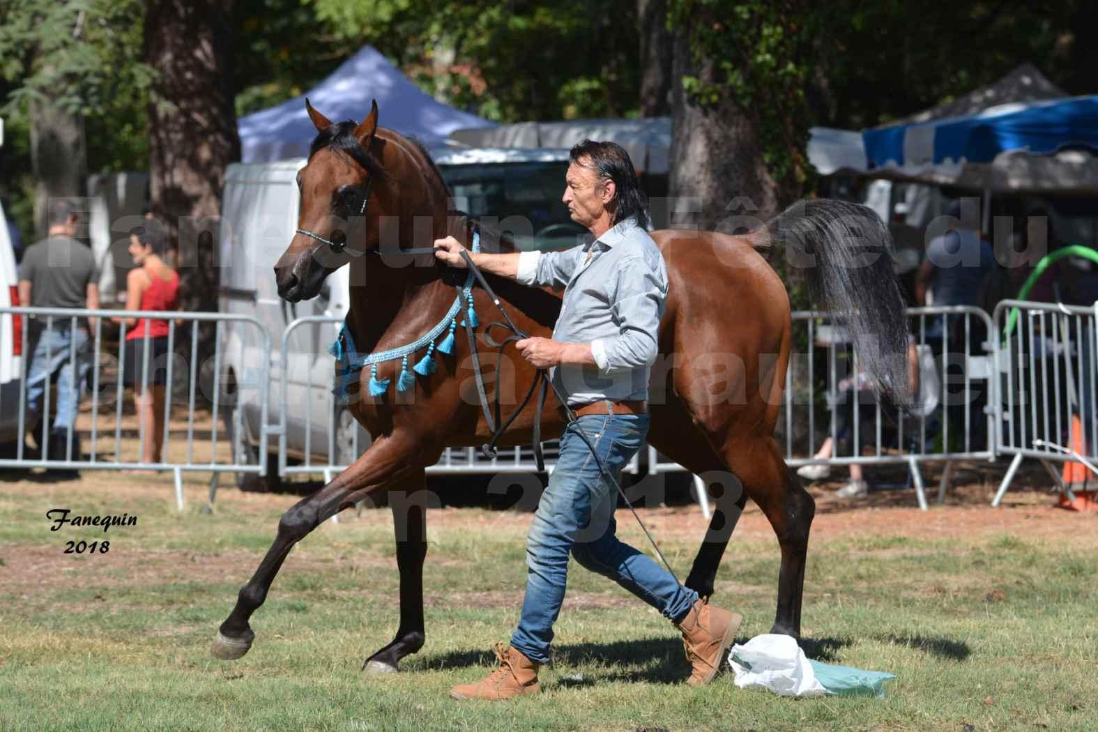 Fête du cheval à GRAULHET le 16 septembre 2018 - Présentation de chevaux Arabe Elevage de GACIA - 12