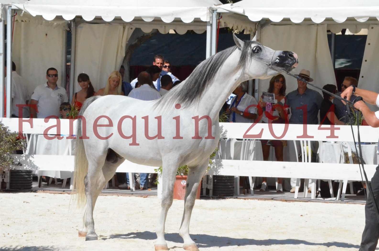 Concours National de Nîmes de chevaux ARABES 2014 - Sélection - SHAOLIN DE NEDJAIA - 84