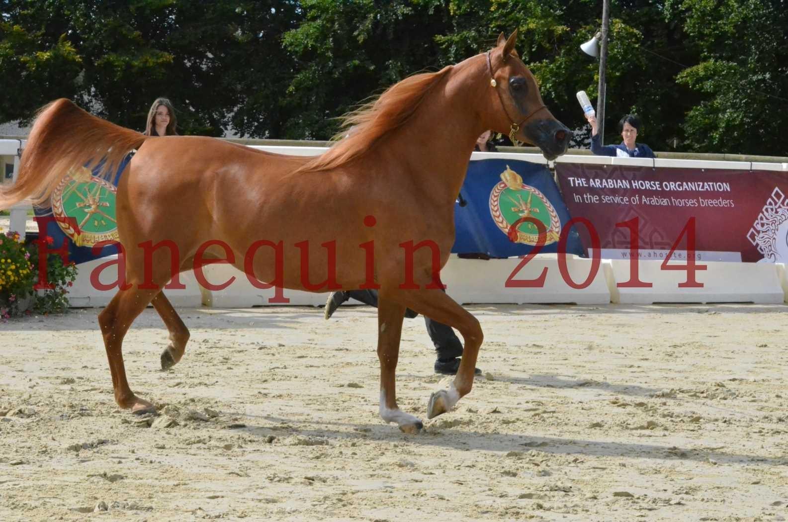 CHAMPIONNAT DE FRANCE 2014 A POMPADOUR - Sélection - LUTFINAH JA - 25