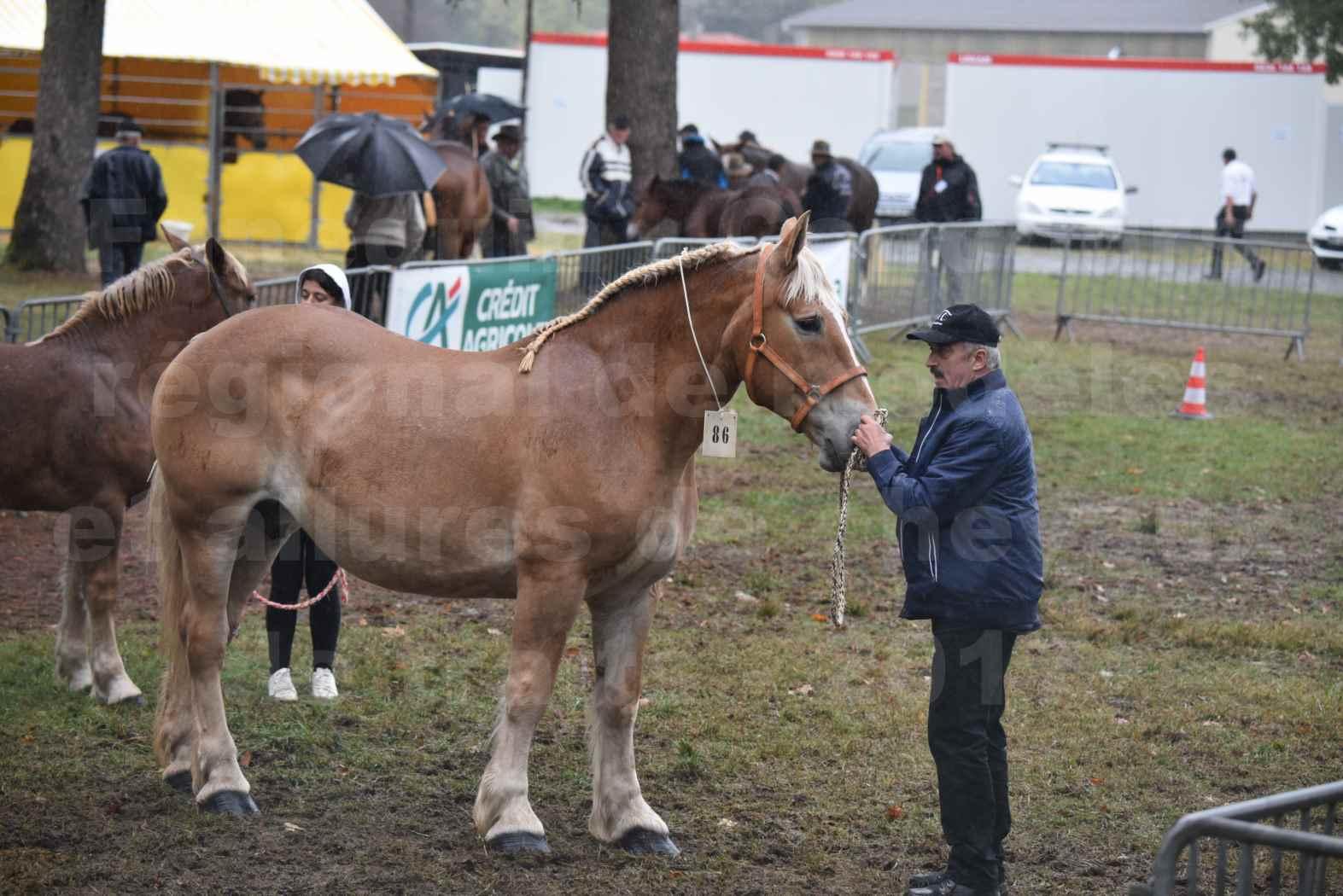 Concours Régional de chevaux de traits en 2017 - Trait BRETON - Jument suitée - OREE DES AMOUROUX - 02
