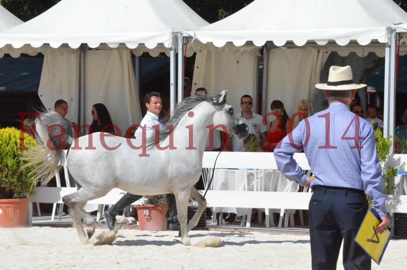 Concours National de Nîmes de chevaux ARABES 2014 - Sélection - SHAOLIN DE NEDJAIA - 64