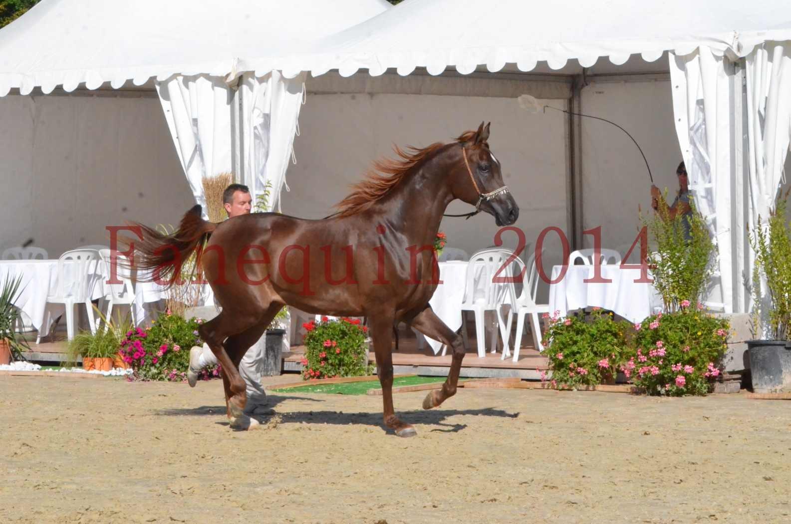 Championnat de FRANCE 2014 - Amateurs - LAMAL - 51