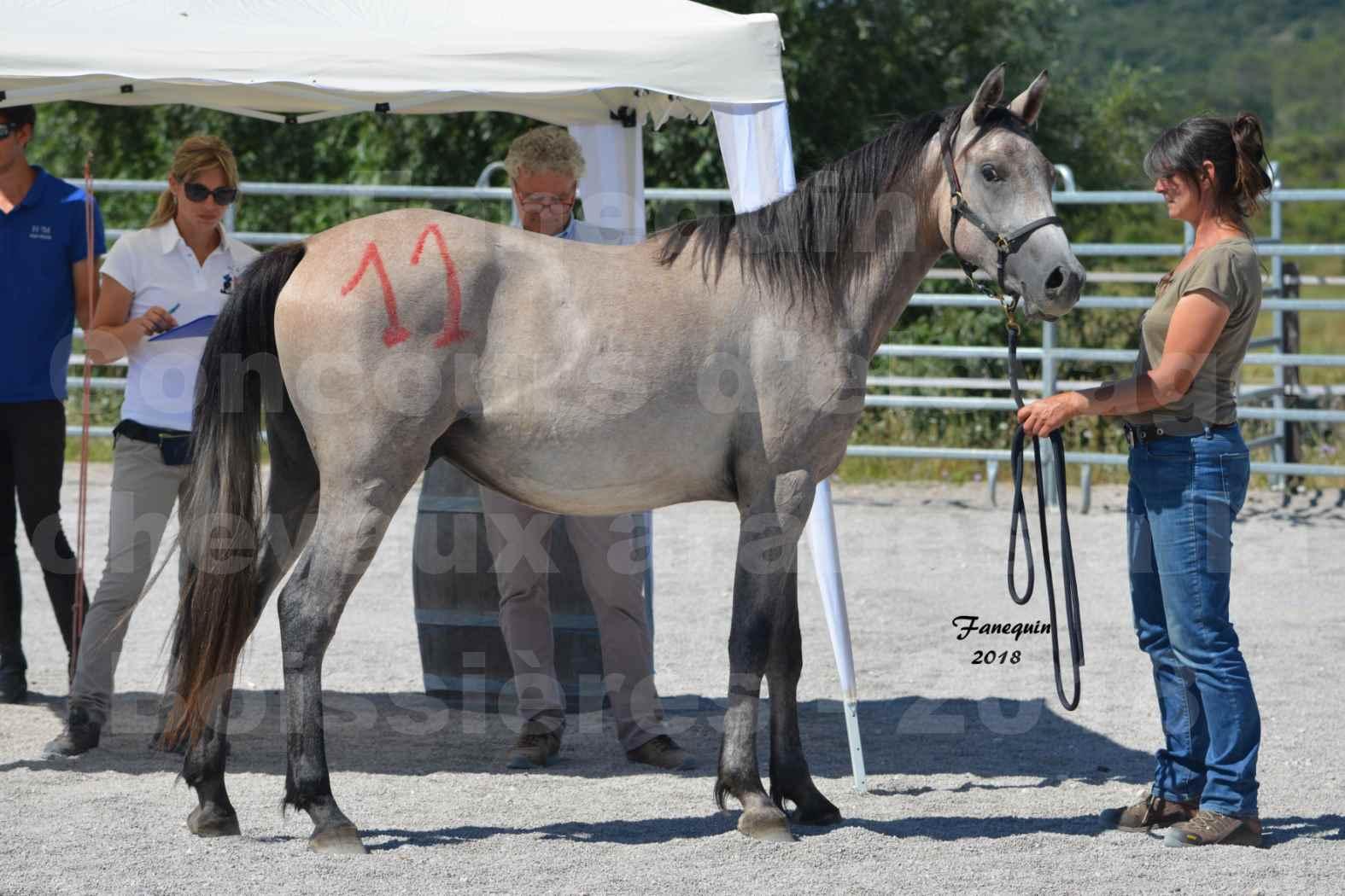 Concours d'Elevage de chevaux Arabes  le 27 juin 2018 à la BOISSIERE - GAZRAK D'AURIERES - 08