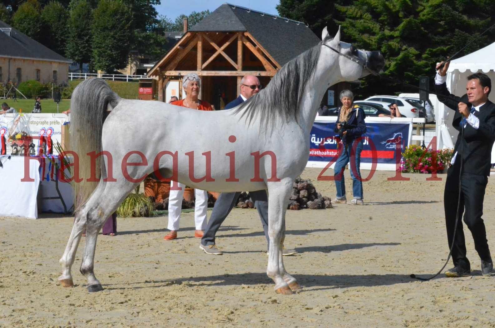 CHAMPIONNAT DE FRANCE  2014 A POMPADOUR - Sélection - SHAOLIN DE NEDJAIA - 55