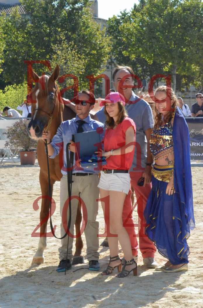 Concours National de Nîmes de chevaux ARABES 2014 - Championnat - MASSAI DE BARREL - 02