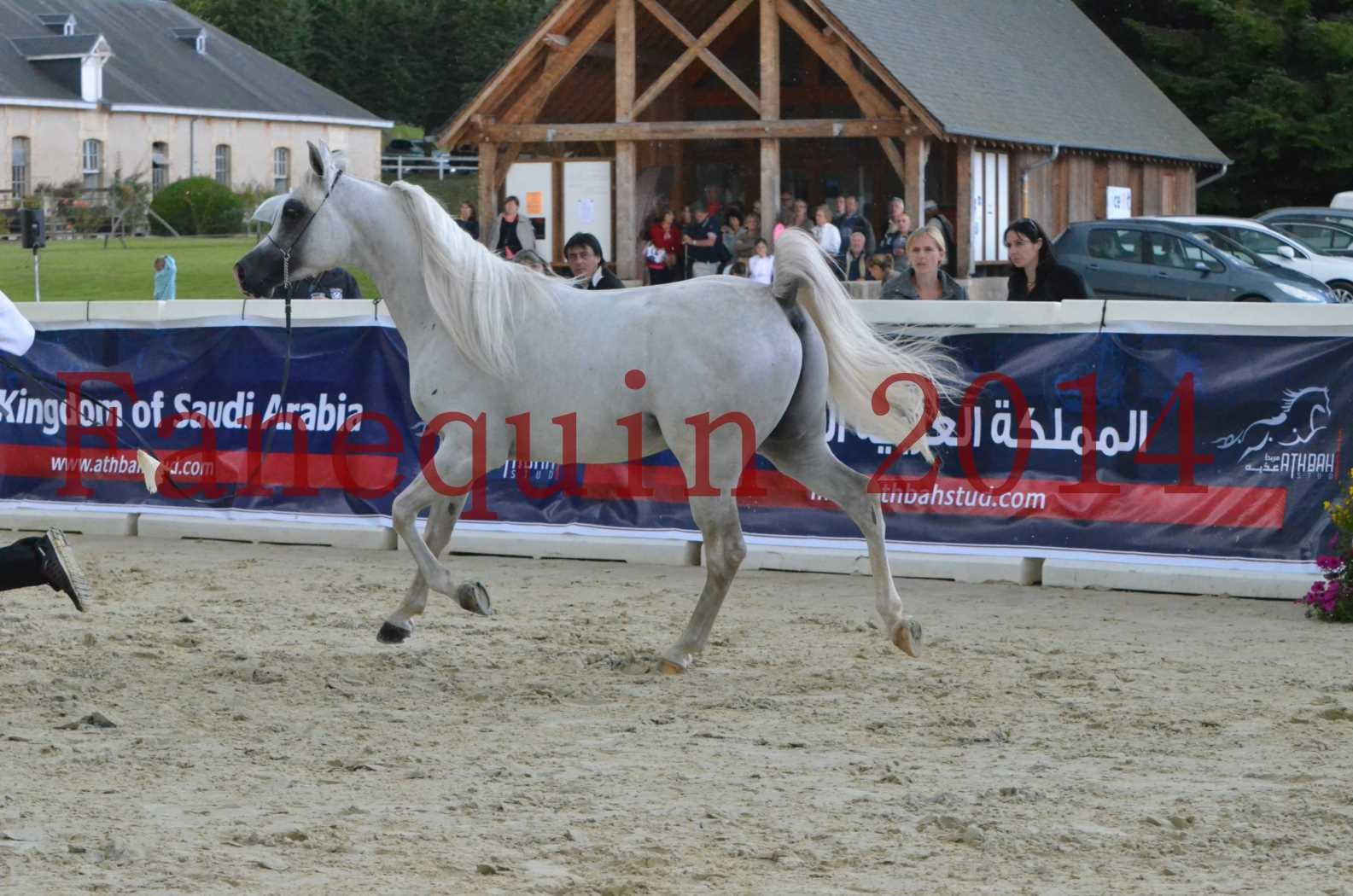 CHAMPIONNAT DE FRANCE 2014 A POMPADOUR - Sélection - FA STARLIGHT - 12