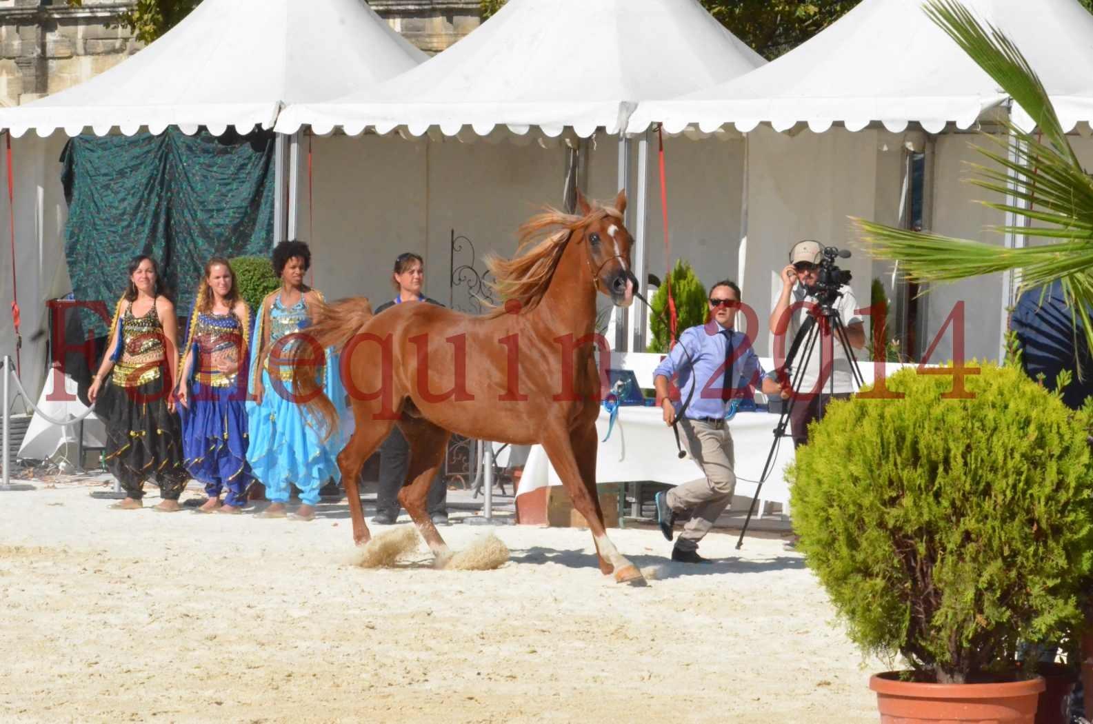 Concours National de Nîmes de chevaux ARABES 2014 - Championnat - MASSAI DE BARREL - 46