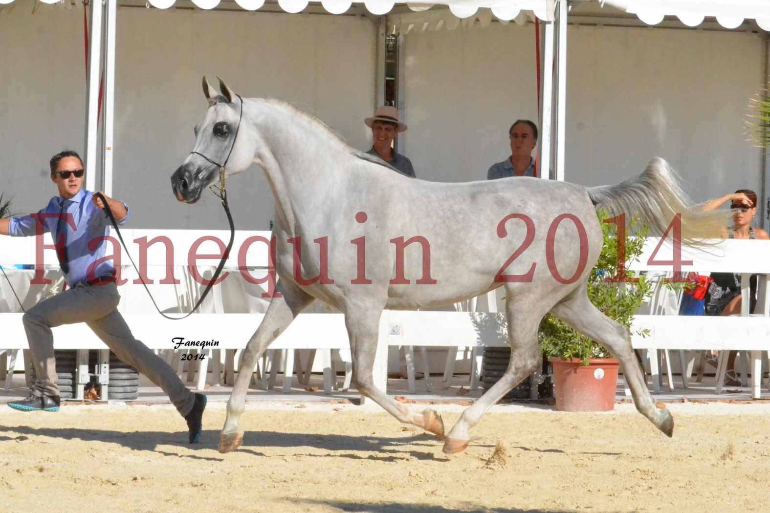 Concours National de Nîmes de chevaux ARABES 2014 - Notre Sélection - ELLESTERA - 06