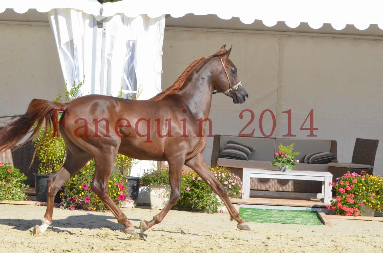 Championnat de FRANCE 2014 - Amateurs - LAMAL - 62