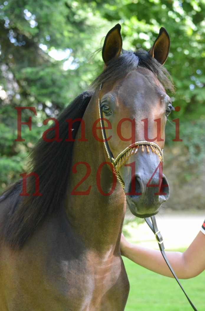 Championnat de FRANCE 2014 - Amateurs - SH FARAJAA - 103