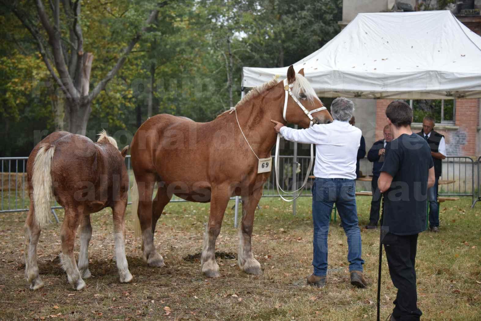 Concours Régional de chevaux de traits en 2017 - Trait COMTOIS - Jument suitée - ROXANE D'USSON - 04