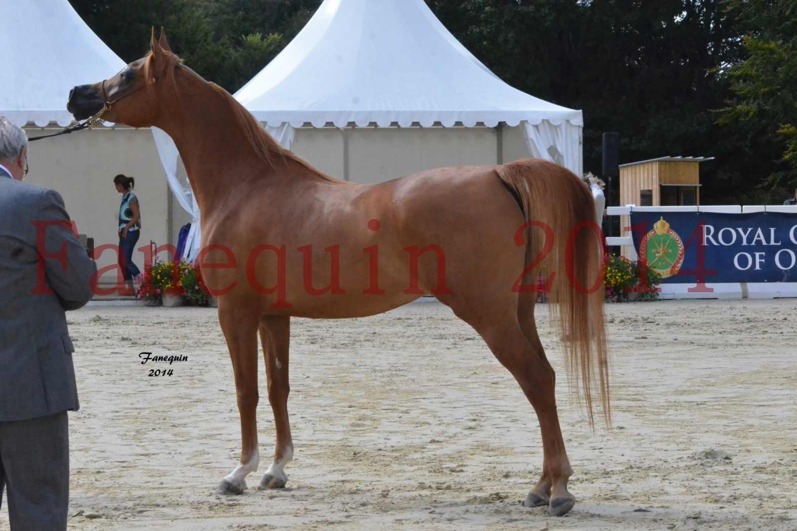 CHAMPIONNAT DE FRANCE 2014 A POMPADOUR - Notre Sélection - LUTFINAH JA - 23