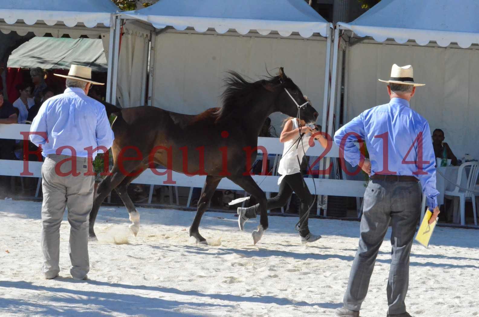 Concours National de Nîmes de chevaux ARABES 2014 - Sélection - Portraits - BALTYK DE CHAUMONT - 09