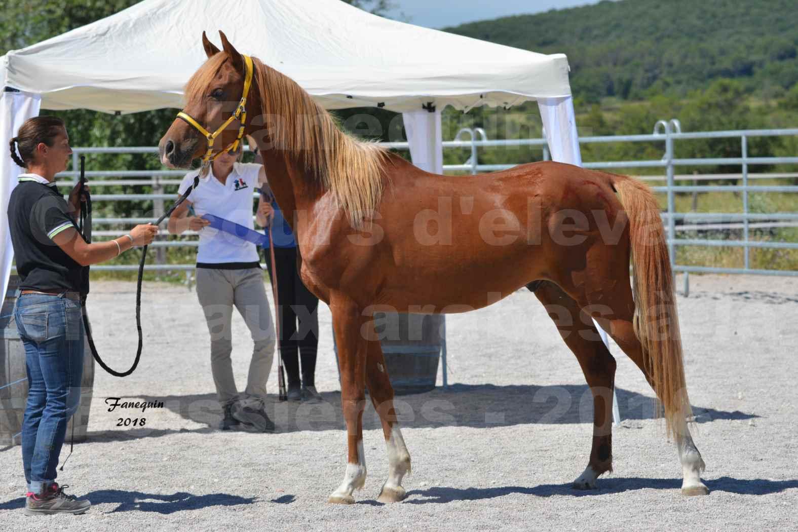 Concours d'Elevage de chevaux Arabes  le 27 juin 2018 à la BOISSIERE - FANGIO DES DOLINES - 01