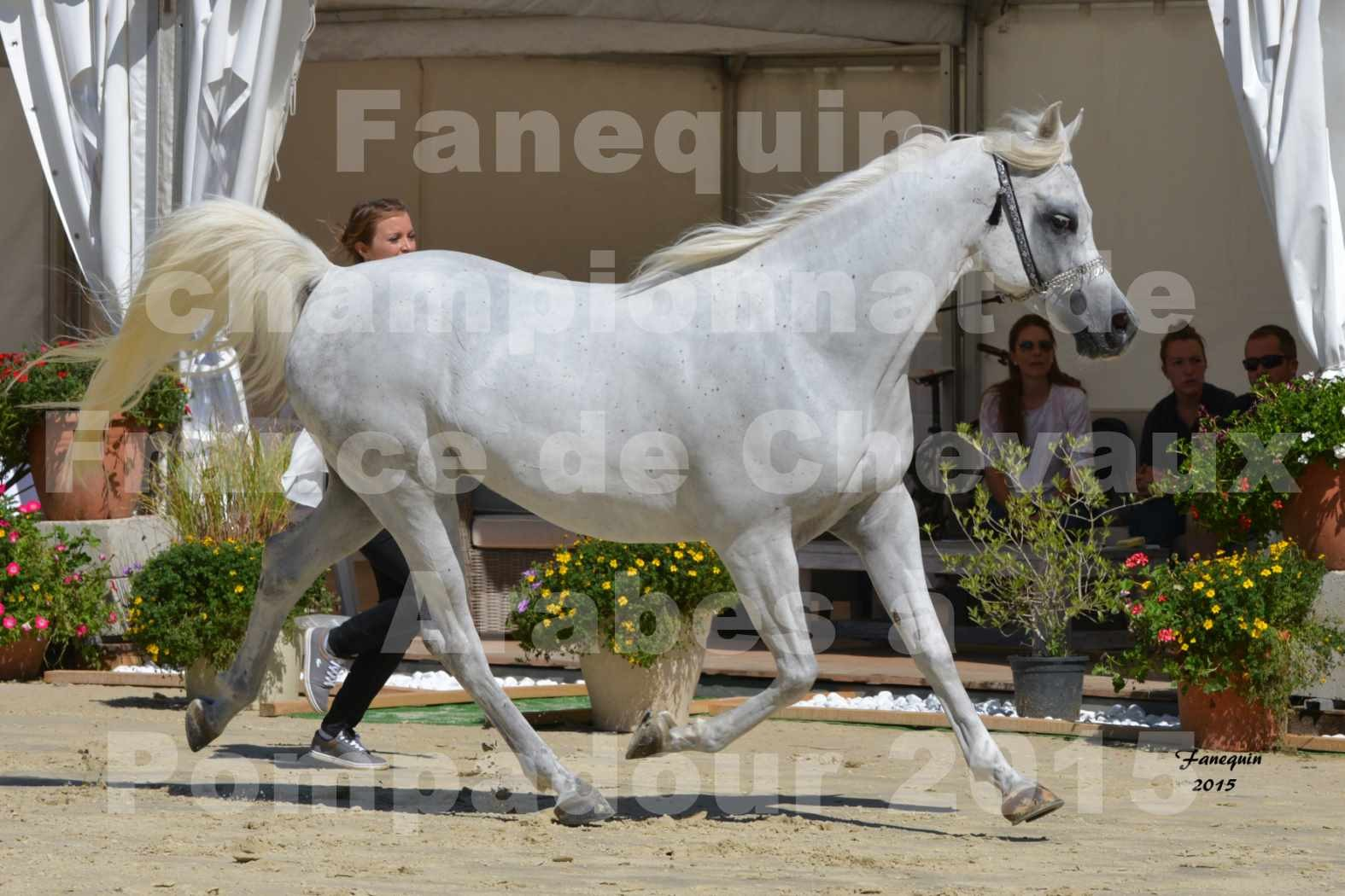 Championnat de FRANCE du cheval ARABE à POMPADOUR 2015 - Classes PROFESSIONNELS - HAADJA - 1