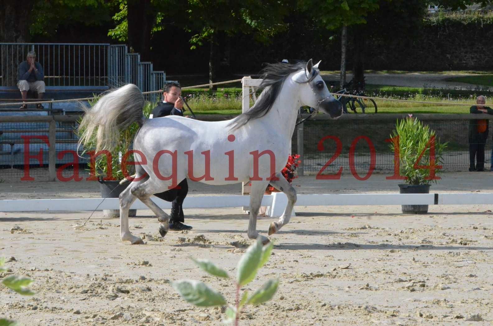CHAMPIONNAT DE FRANCE  2014 A POMPADOUR - Sélection - SHAOLIN DE NEDJAIA - 01