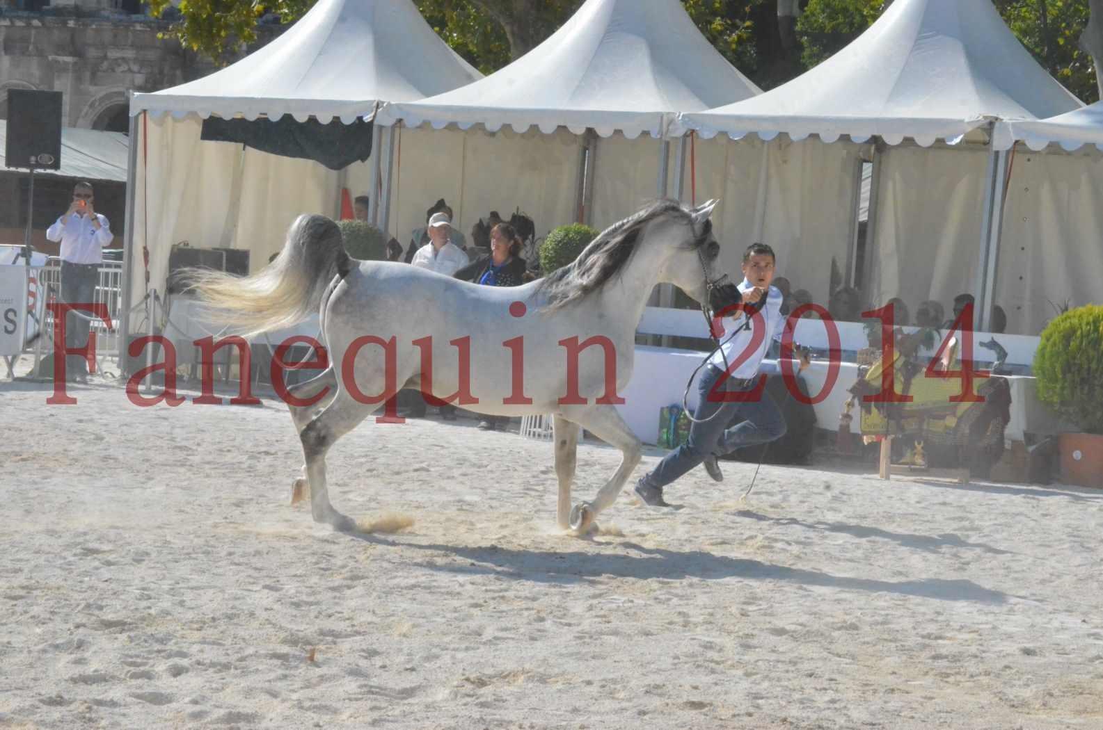 Concours National de Nîmes de chevaux ARABES 2014 - Championnat - SHAOLIN DE NEDJAIA - 11