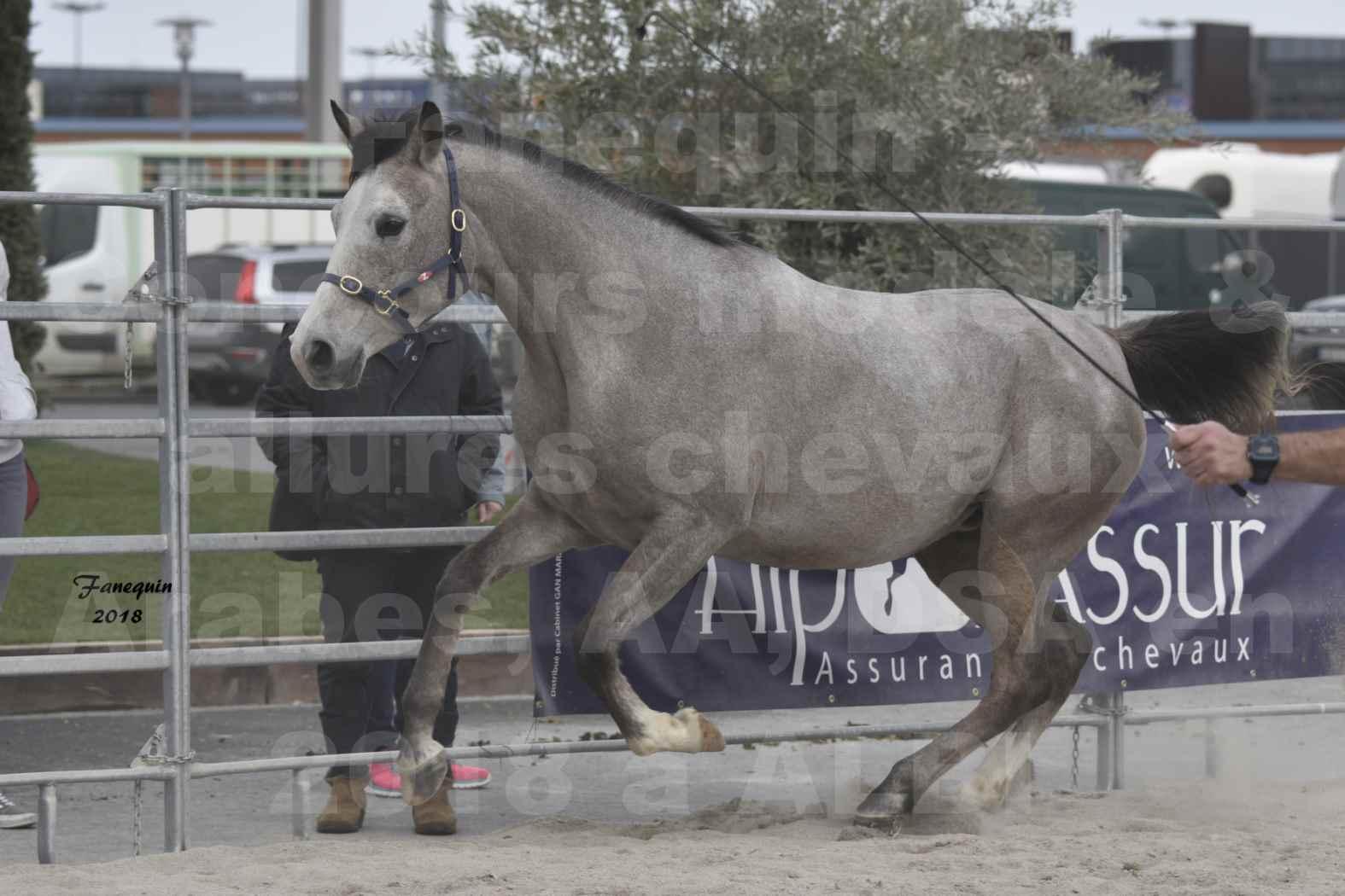Concours d'élevage de Chevaux Arabes - D. S. A. - A. A. - ALBI les 6 & 7 Avril 2018 - FESIHAMKA ARTAGNAN - Notre Sélection - 9