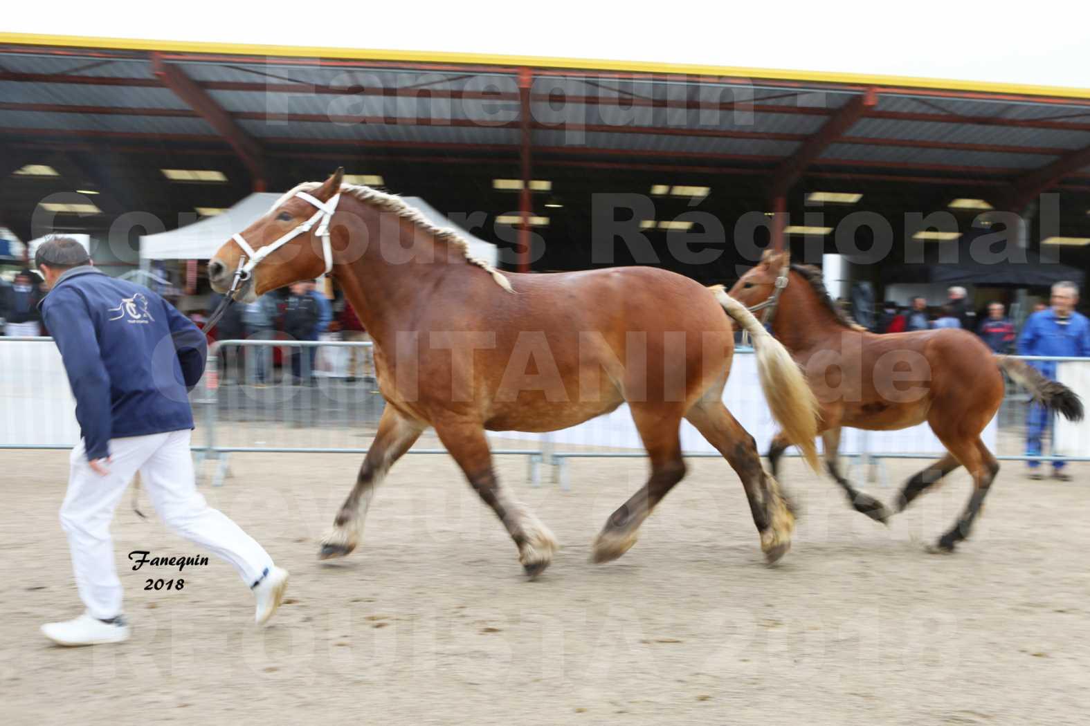 Concours Régional OCCITANIE de chevaux de traits à REQUISTA - DIANE DE GRILLOLES - 3