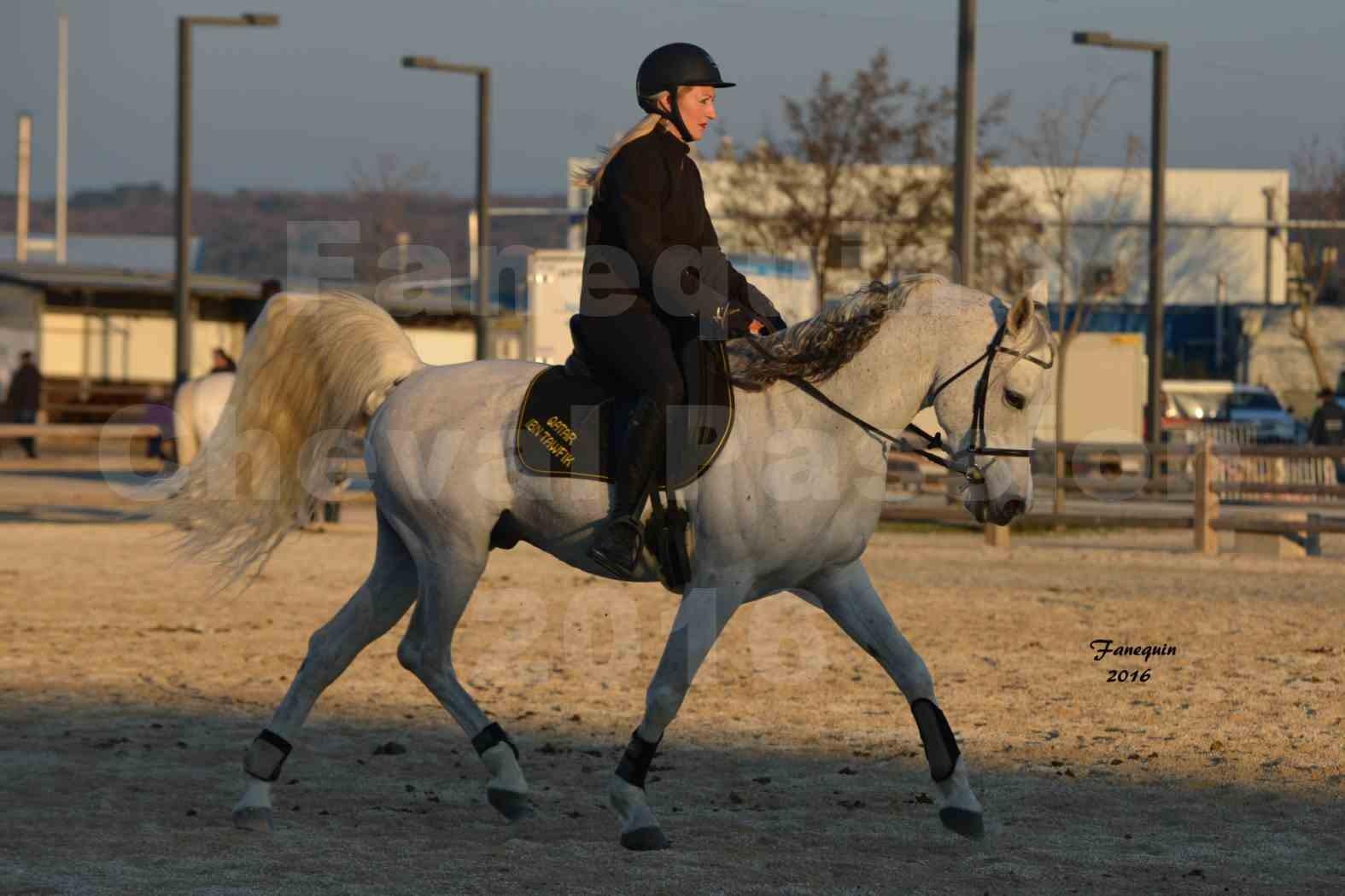 Cheval Passion 2016 - Présentation extérieure de chevaux Arabes montés - 23