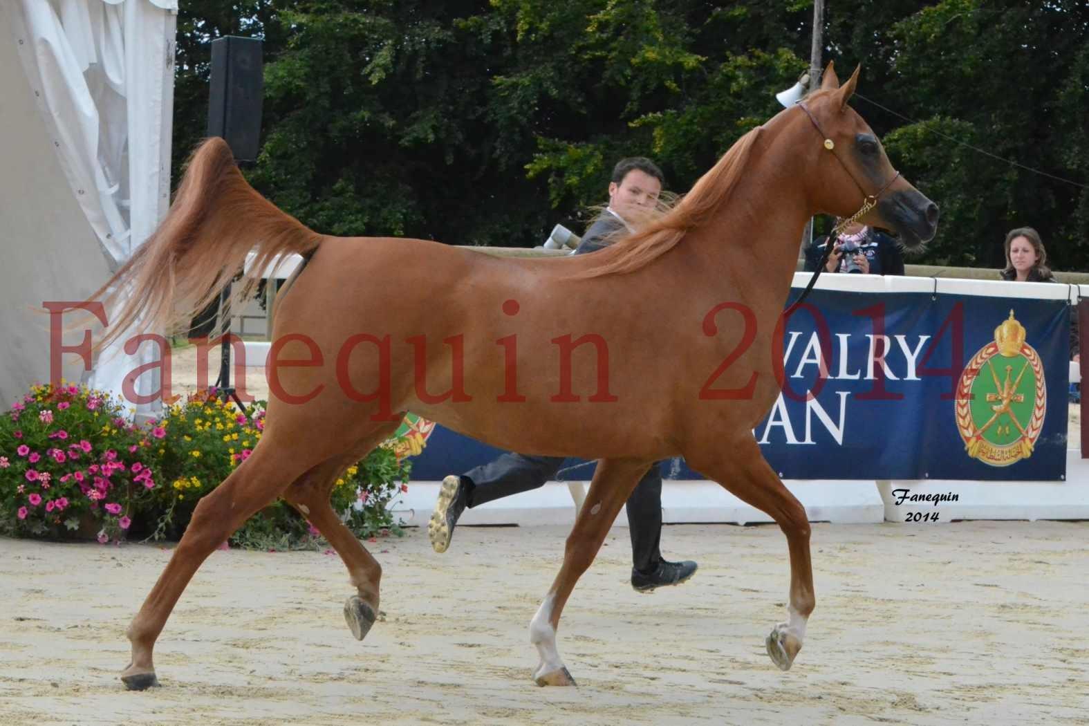 CHAMPIONNAT DE FRANCE 2014 A POMPADOUR - Notre Sélection - LUTFINAH JA - 14