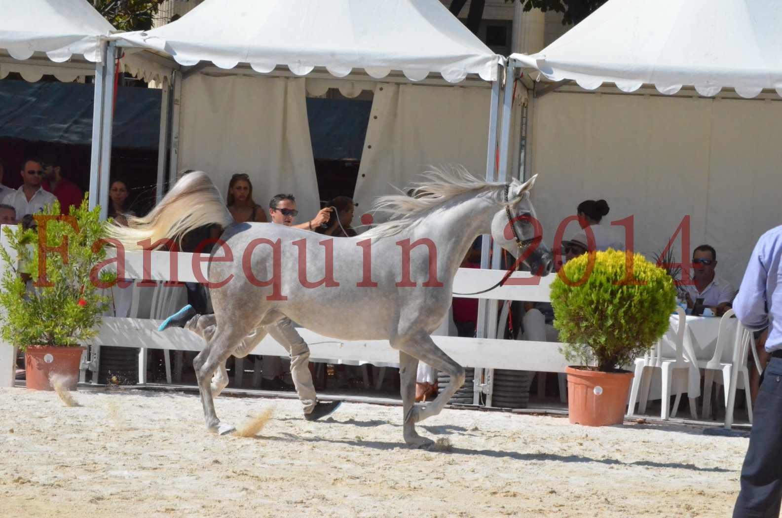 Concours national de Nîmes 2014 - Championnat Femelles Juniors - VOLODIA DE LAFON - 04