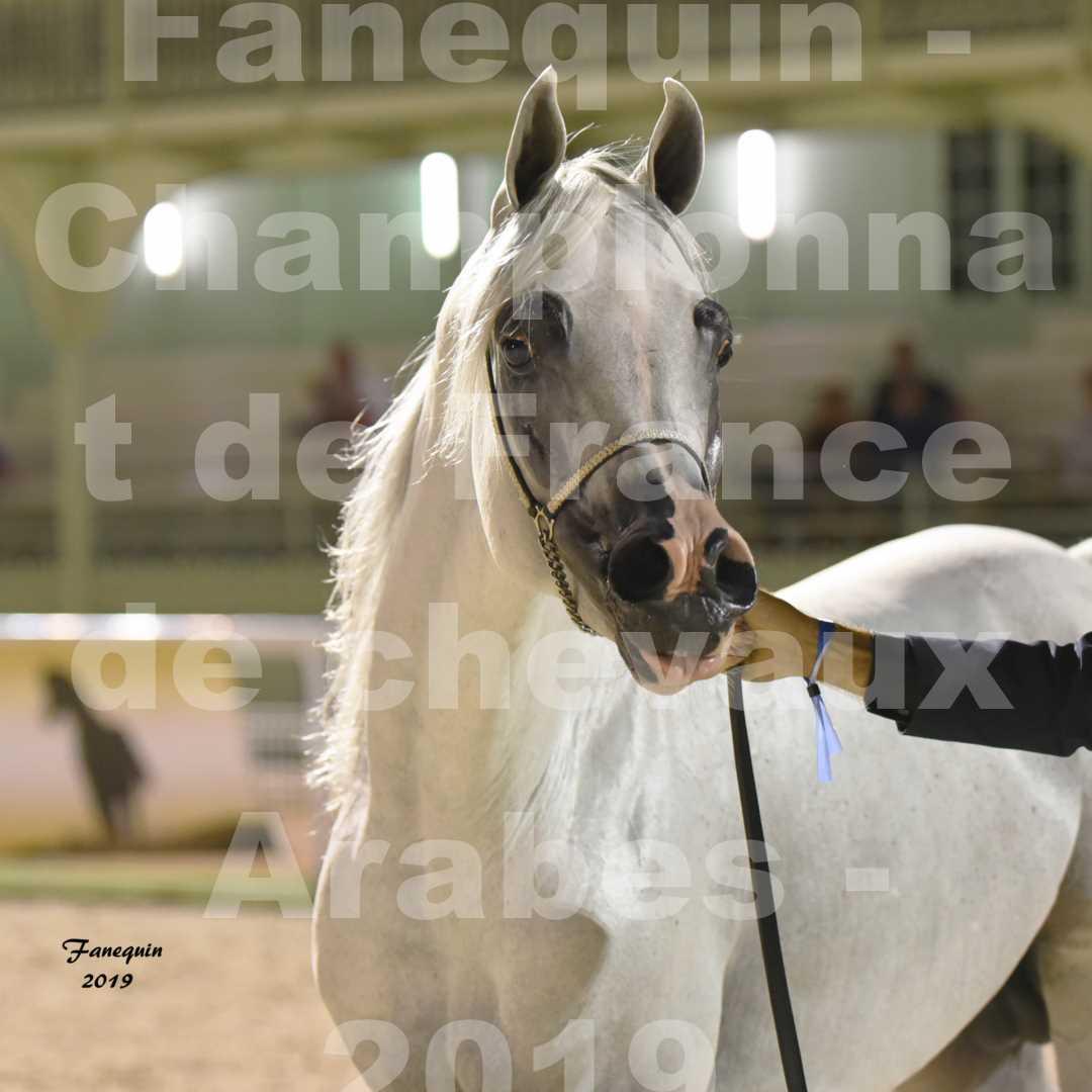 Championnat de France des chevaux Arabes en 2019 à VICHY - SHAMS EL ASHIRAF - Portraits - 4