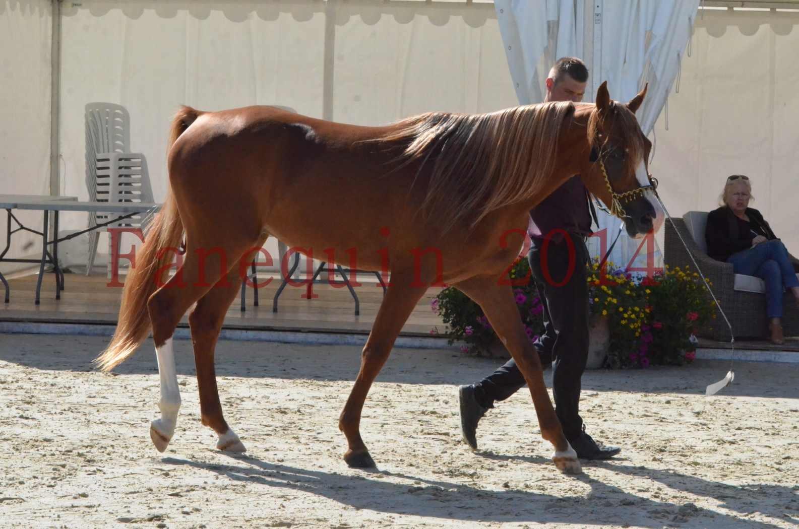Championnat de FRANCE 2014 - Amateurs - SELECTO IBN SAMAWI - 024